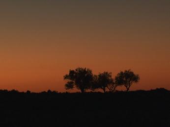 trees-at-dawn